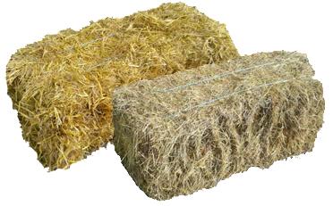 Hay-straw